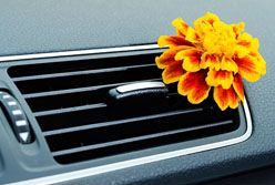 Blüte in Lüftung im Auto